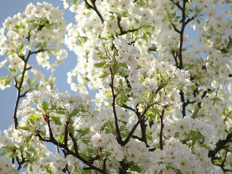 A što drugo nego proljeće
