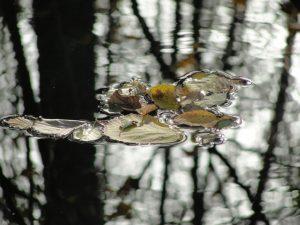 Listovi na vodi